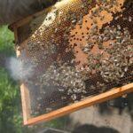 Vaitukaičių bitynas_3